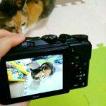【お買い物レポ】今日のAmazon便。コンパクトカメラとビデオカメラの付属品が届きました!